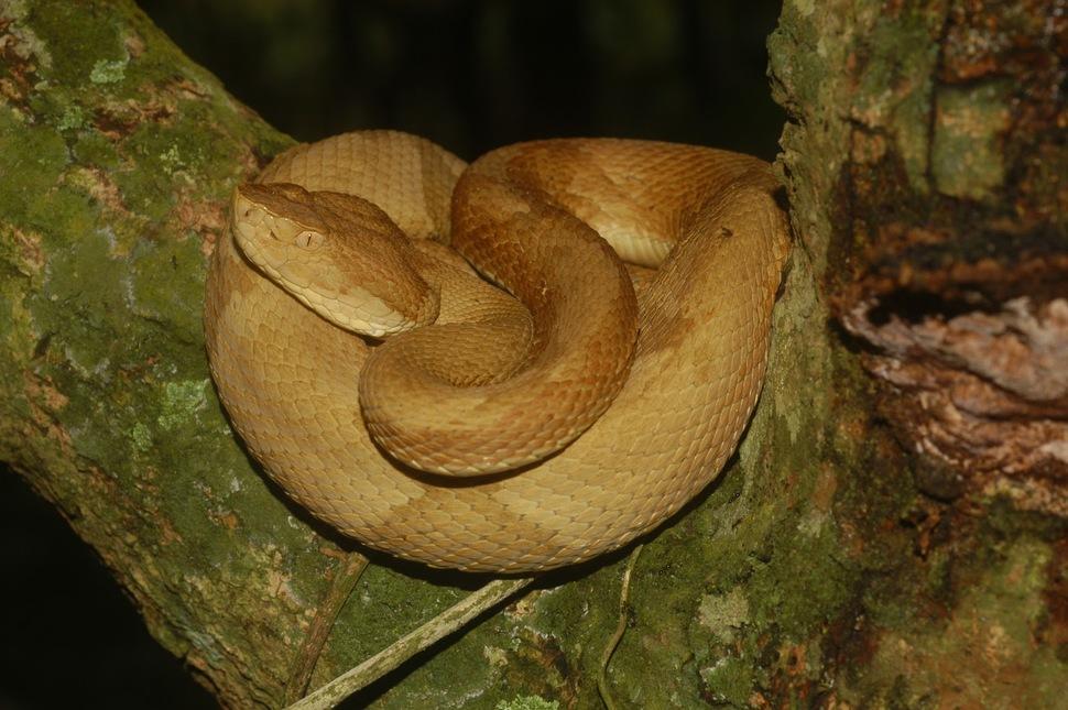 25. Snake Island in Brazil