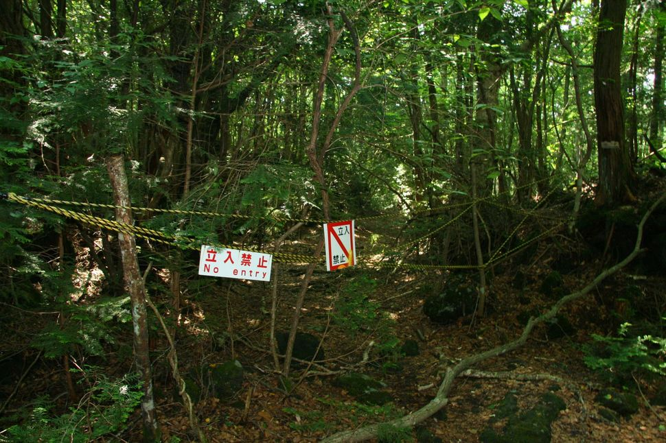 8. Suicide Forest in Japan