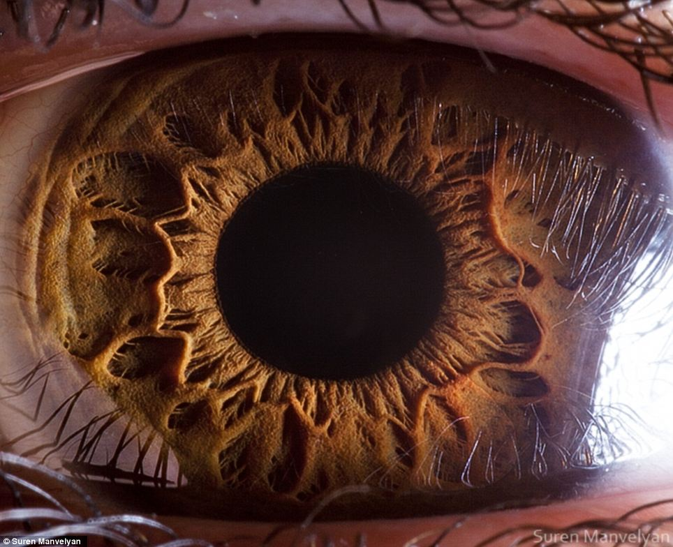 1. The muscles in your eyes focus at least 100,000 times a day