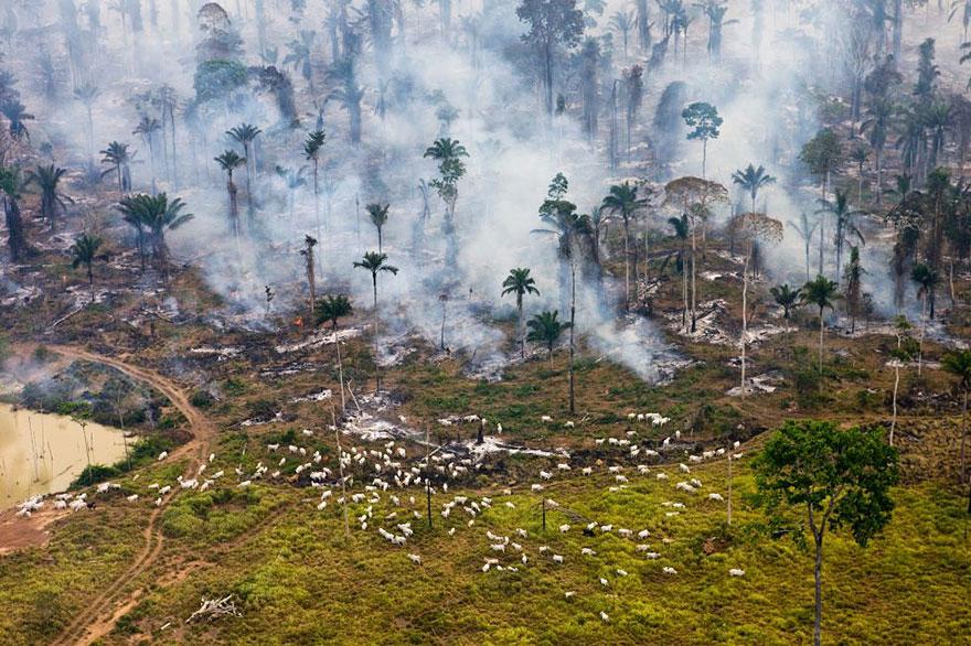10. Burning Amazonian jungle