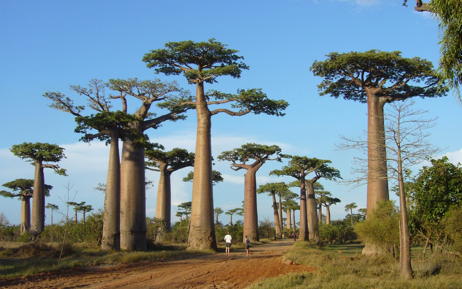 16. Madagascar - 35 Years